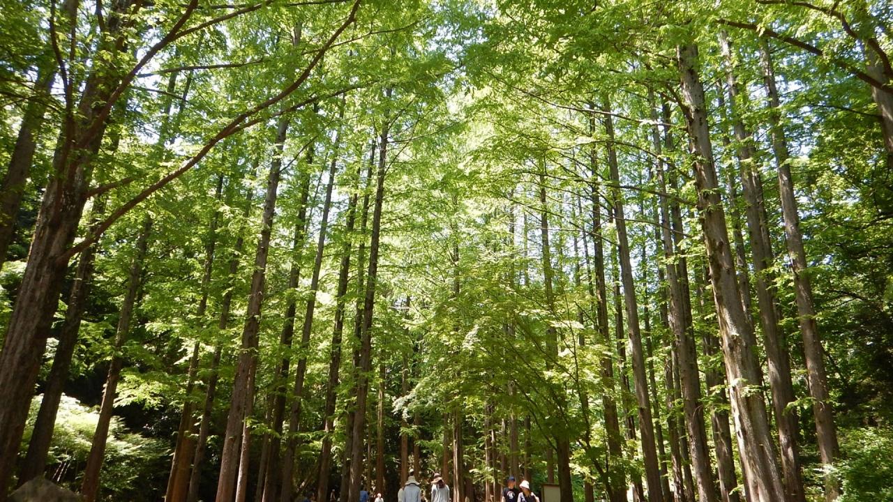 trees in park, https://trip.pref.kanagawa.jp/destination/exploring-ikuta-ryokuchi-park/410