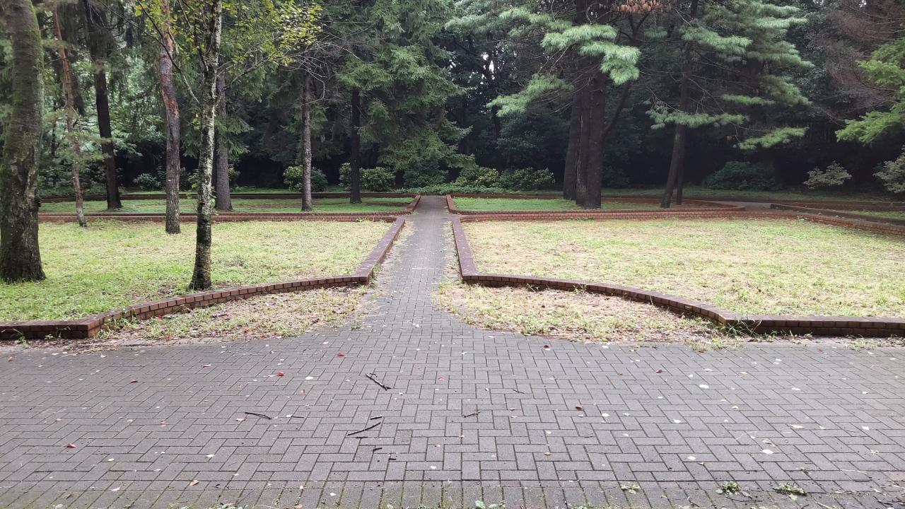 2021 sep 04 brick walkways below trees