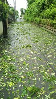 2019 sep 09 leaves blown onto street