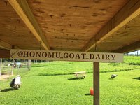 2019 oct 18 honomu goat dairy follow